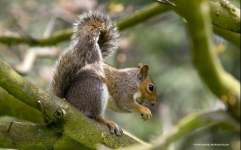 squirrel-tree-desktop-animals-squirrels-resolution-images-wallpapers-208894