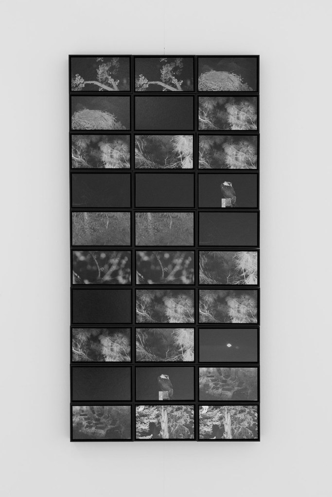 PHROOM magazine // international research platform and contemporary fine art photography and video art magazine // text