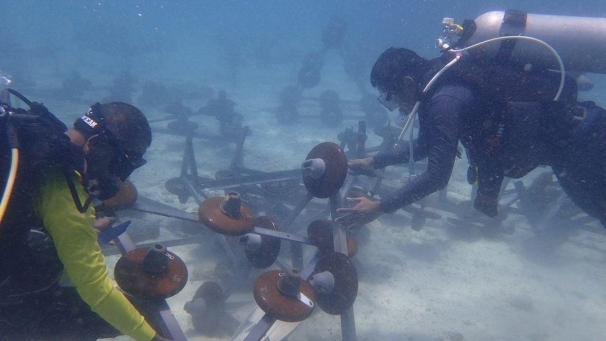 coral-reefs-koh-mai-thon-phuket