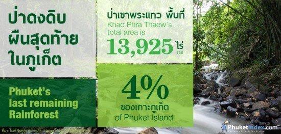 Phuket's Rainforest