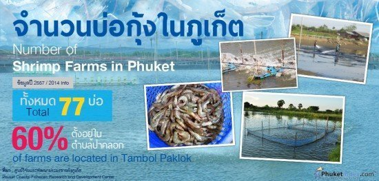 Shrimp Farms in Phuket