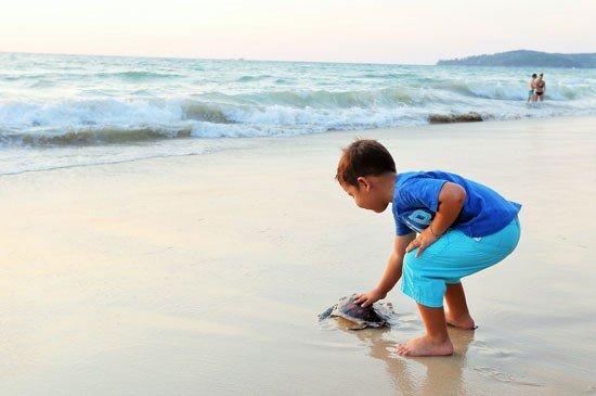Laguna Phuket to Host 22nd Sea Turtle Release this Sunday