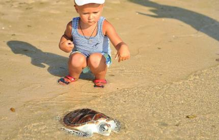 Fighting Chance Given at Laguna Phuket's 22nd Sea Turtle Release