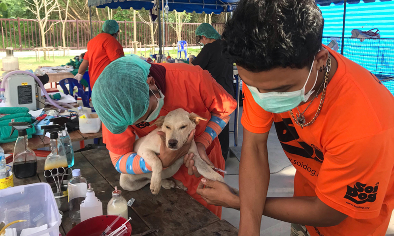 Soi Dog's Mobile clinic continues in Phuket, starting in Rawai