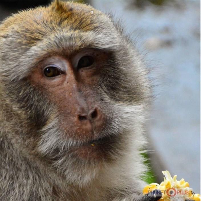 экскурсия в храм с обезьянами