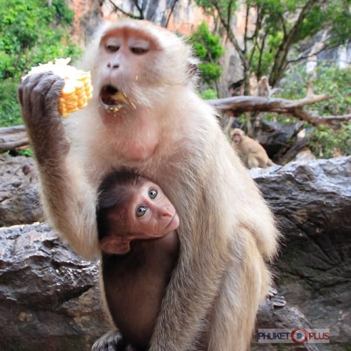 где безопасно покормить обезьян
