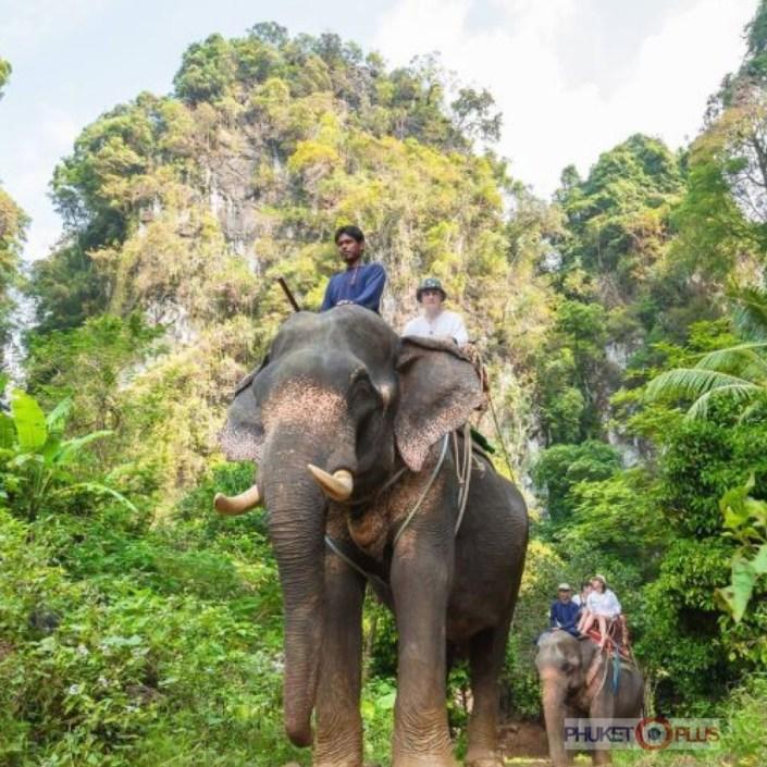 где покататься на слонах в джунглях