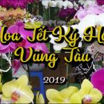 Chợ Hoa Xuân Kỷ Hợi Vũng Tàu 2019