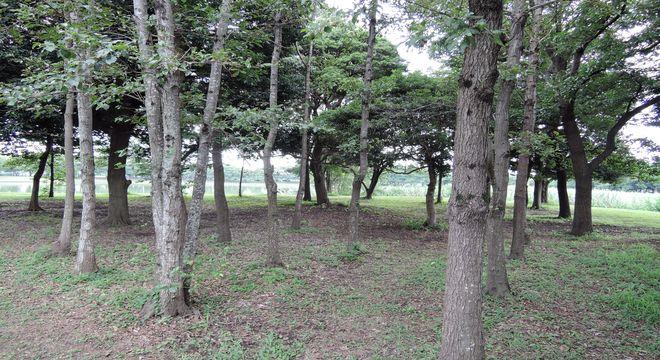 修景池近くの森