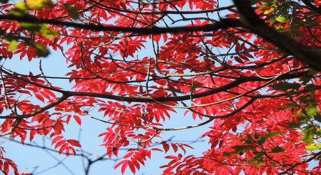 岩手県の紅葉スポット