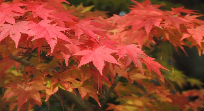 鳥取県の紅葉スポット