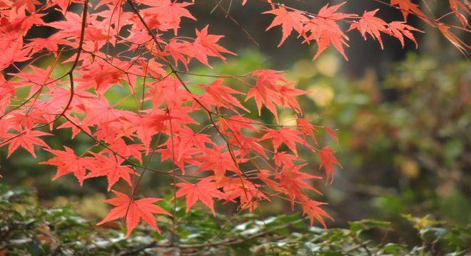 佐賀県の紅葉スポット