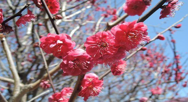 高知県の梅の名所