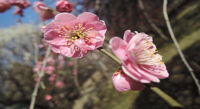 長野県の梅の名所