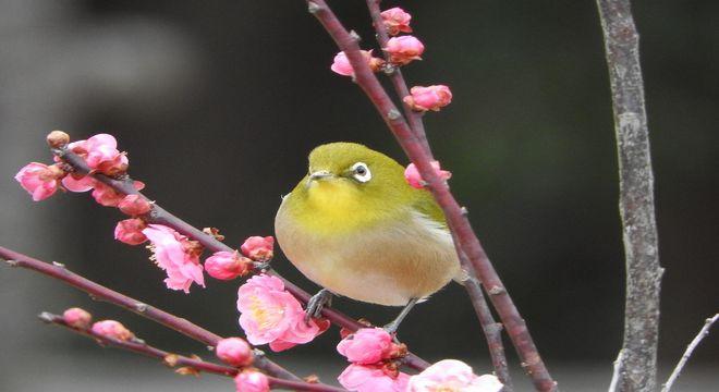 兵庫県の梅の名所