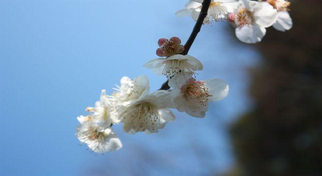 和歌山県の梅の名所
