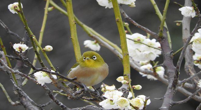 栃木県の梅の名所