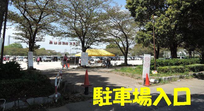出羽チューリップフェスタの駐車場(入口)