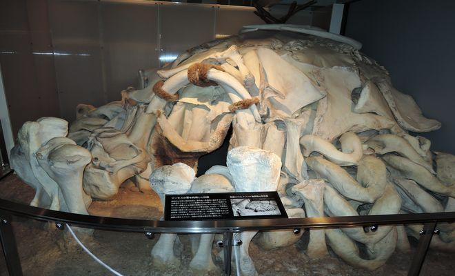 マンモスの骨を使った住居模型