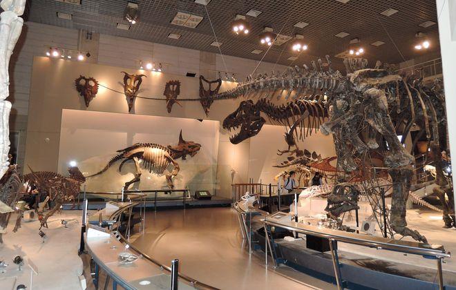 科学博物館|恐竜の展示ルーム