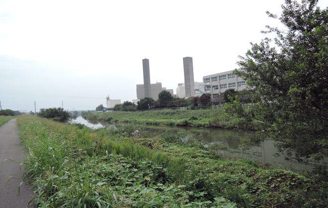 綾瀬川(左岸)