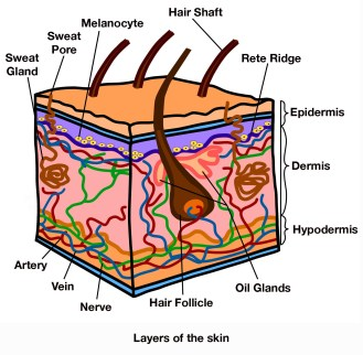 Skin Remodeling DIY: An Introduction to the Underground