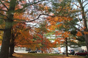 Coming upon one of the entrance, visitors see the massive trees on campus.
