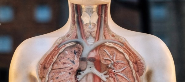 Human Anatomical Terms With Interesting Origins Physical Therapy Web
