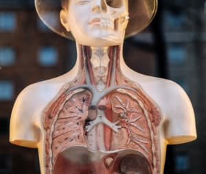 Etymology of Anatomical Terms