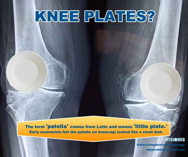 Etymology of Patella - Knee Plates