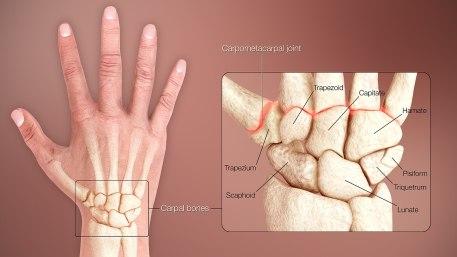 Carpal Bones of the Wrist
