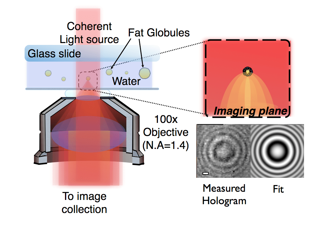 hight resolution of technical note characterizing individual milk fat globules with holographic video microscopy