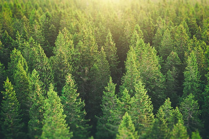 how forests could limit