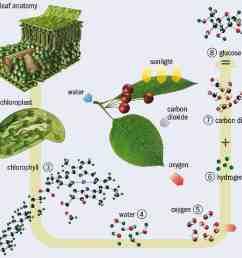 diagram of photosynthesis [ 962 x 866 Pixel ]