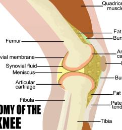 structure of knee [ 2242 x 1706 Pixel ]
