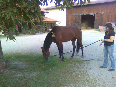 Marion Löffler - Pferdephysiotherapeutin mit Pferd