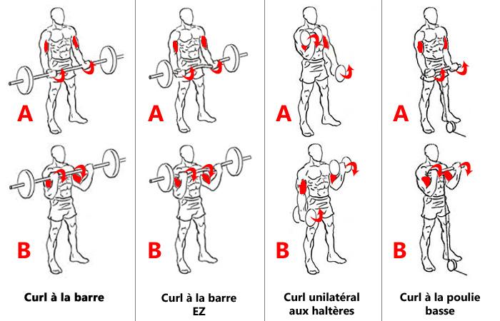 Curl pour biceps