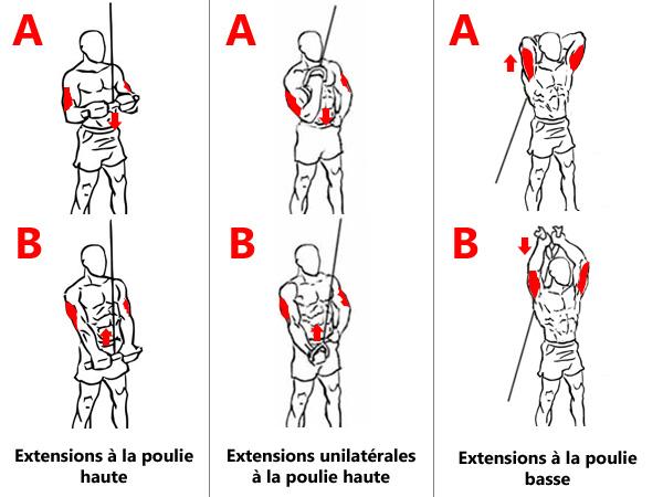 Exercices d'isolation des triceps aux câbles
