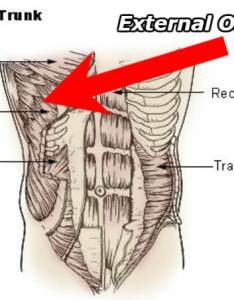 also external oblique pain strain or hernia find out in seconds rh physiqz