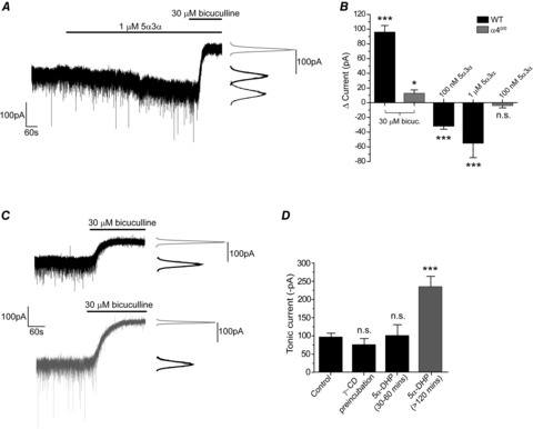 Developmentally regulated neurosteroid synthesis enhances