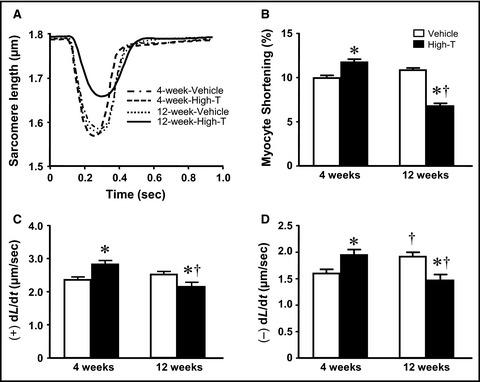 Chronic high‐dose testosterone treatment: impact on rat