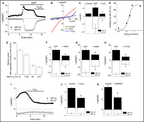 Functional expression of TRPM7 as a Ca2+ influx pathway in
