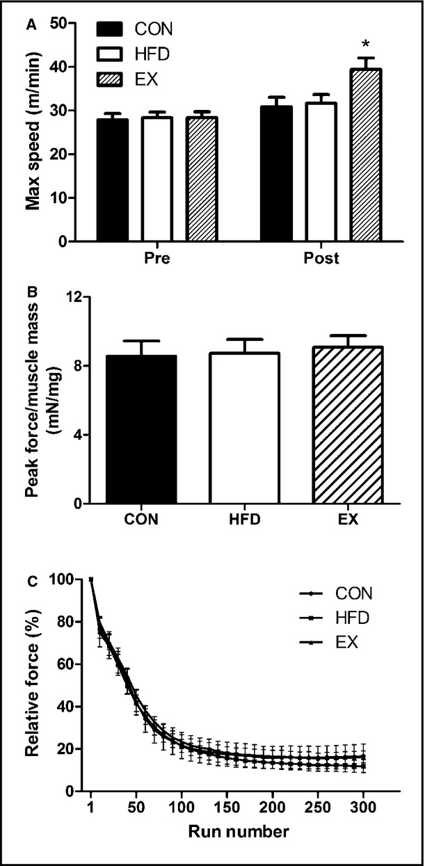 Early oxidative shifts in mouse skeletal muscle morphology