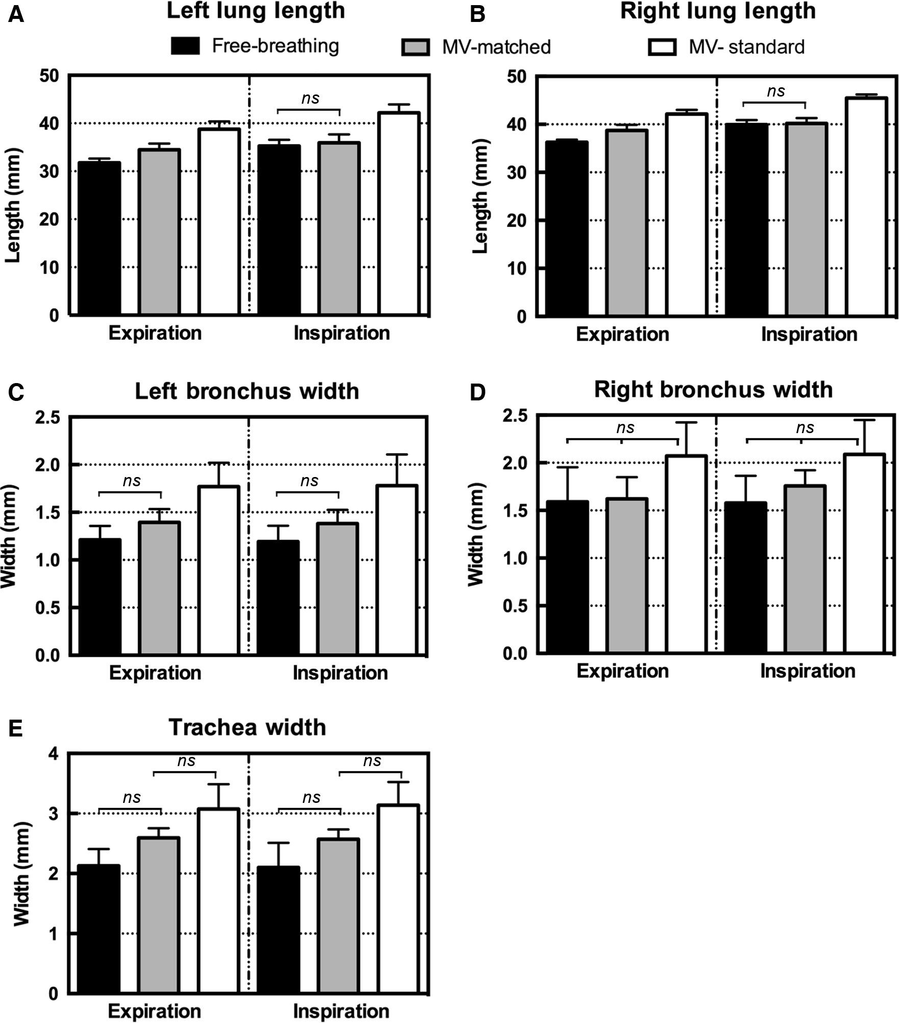 A respiratory‐gated micro‐CT comparison of respiratory