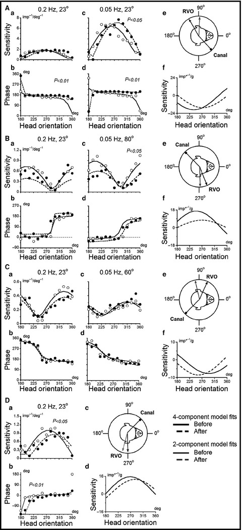 Adaptation of spatio‐temporal convergent properties in
