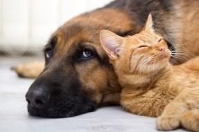 Haustiere senken Bluthochdruck Risiko
