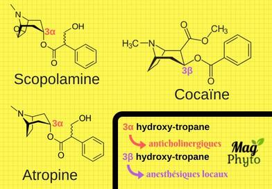 Relation structure-activité des alcaloïdes tropaniques