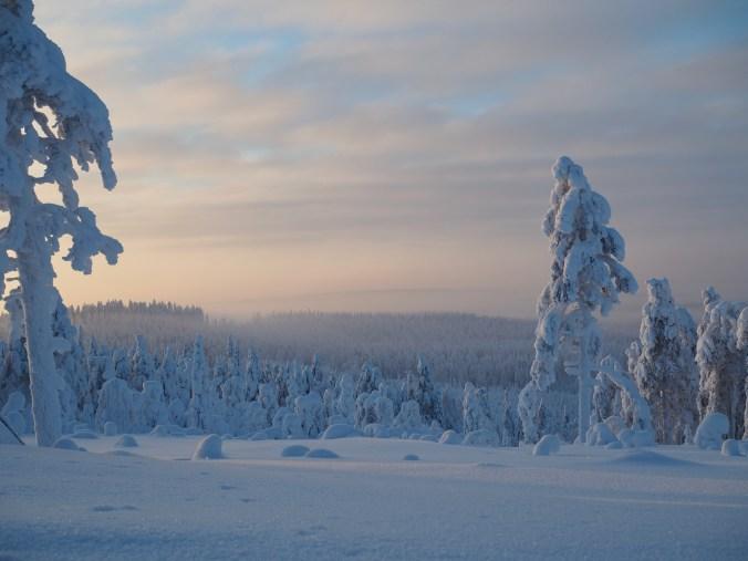 arctic giant paltamo