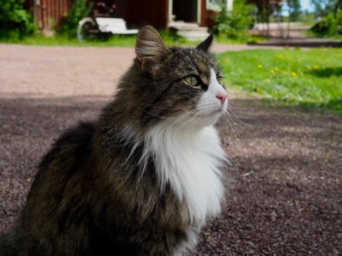 kvarnbo gästhem munken kissa