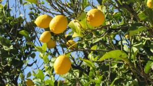 limone-piatti-tipici-siciliani